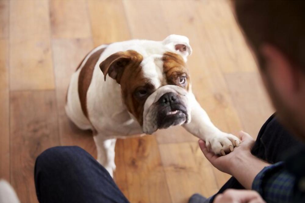 easy-dog-tricks-for-beginners
