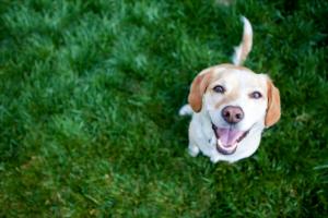 how-to-teach-your-dog-tricks